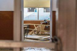 爆発の被害を受けた公立学校の教室。(2020年8月17日撮影)