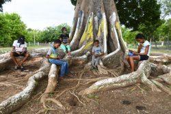ソーシャルディスタンスを保ちながら、木の下でインターネットを利用する子どもたち。(ジャマイカ、2020年9月撮影)