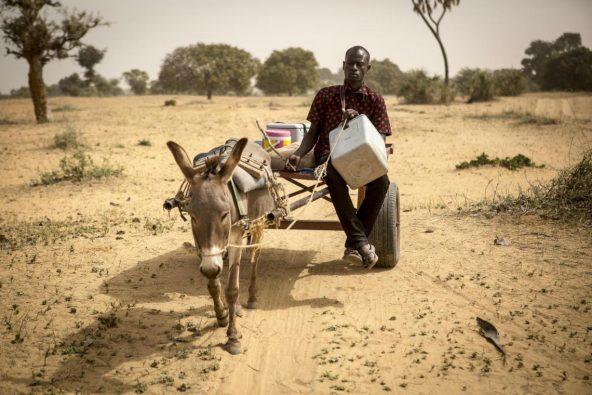 ワクチンを届けるためにロバの荷車に乗って移動するママドゥさん(29歳)。マリのモプティにある村の子どもたちにワクチンを届けている。
