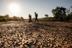 干ばつの被害を受けるグウェンベ渓谷で、乾いた川の上を歩く女性たち。(ザンビア、2020年1月撮影)