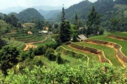 モン族が米を育てる山岳地帯の狭い土地。