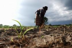 畑仕事をする女性。(マラウイ)