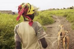 ユニセフが武装勢力から解放された子どもたちやコミュニティの脆弱な子どもたちに送ったヤギの散歩をするサイモンくん。