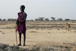 家畜のヤギを世話する男の子。200匹いたヤギも、雨が降らず草が育たなかったため、10匹にまで減ってしまったという。(ケニア、2011年撮影)