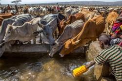 給水タンクに水を汲む少年と水を飲む家畜。