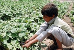 サヌア市北部のバニ・アル・ハレス地域で汚水が氾濫した農地で栽培された野菜を手にする男の子。