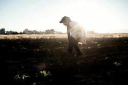ダイアナさん(13歳)がレバノンのベッカー高原の農場で作物を収穫しています。シリア難民のおとなはレバノンで自由に働くことができません。検問所で身分証を提示する必要もなく、賃金も安く、権利に関する認識が乏しい子どもたちが、家族を支えるために働いているのが現状です。