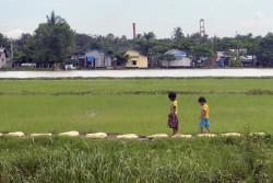 孤児院ツーリズムが盛んなミャンマー・ダラの田んぼを歩く子どもたち。