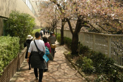 穏やかな春の陽気の中、お花見の名所でもある目黒川沿いを歩きました。